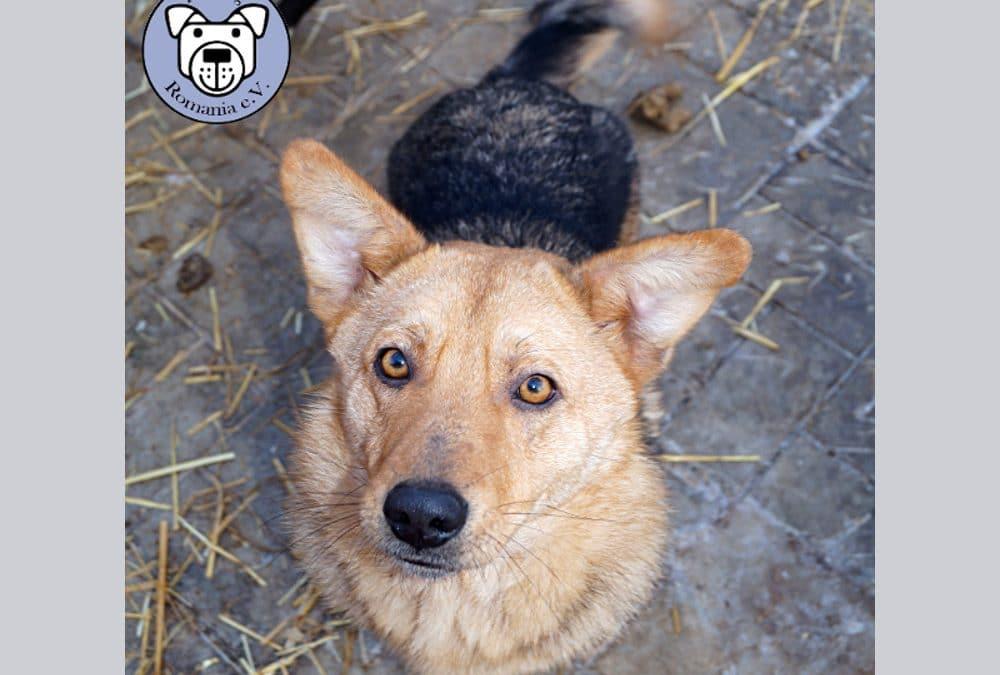 Jay-Jay -toller Hundejunge wartet schon über ein Jahr