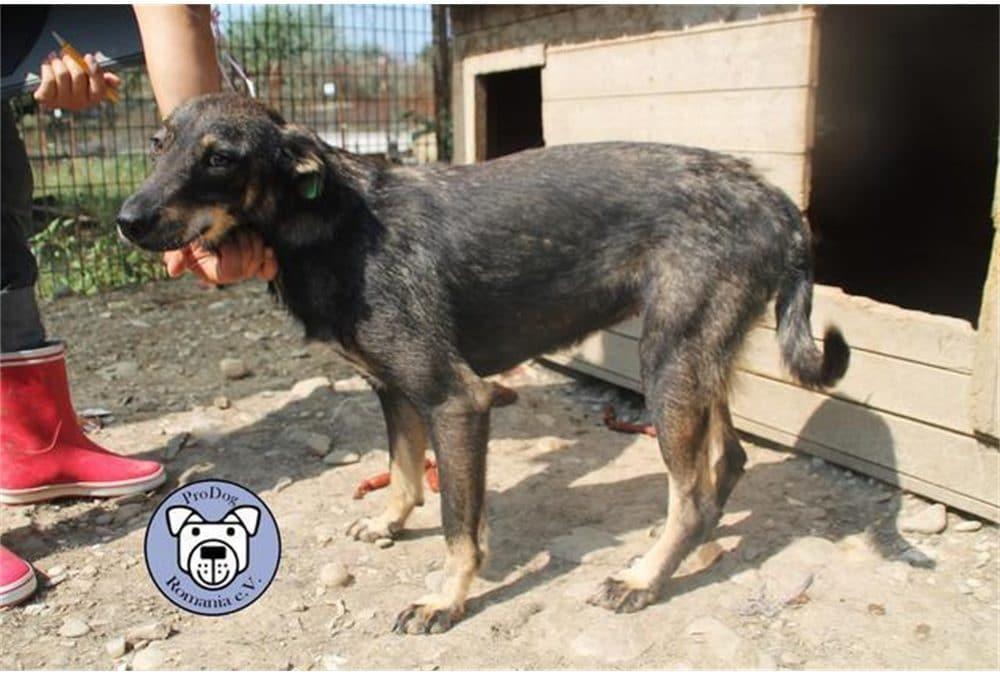 Oxana -wartet schon so lange: Pflegestelle oder Zuhause gesucht!