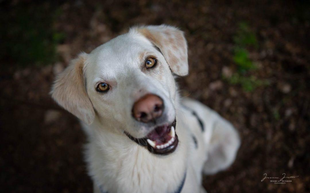 "Canavaro ""Canny"" – sensibler Rüde sucht Zuhause bei hundeerfahrenen Menschen!"