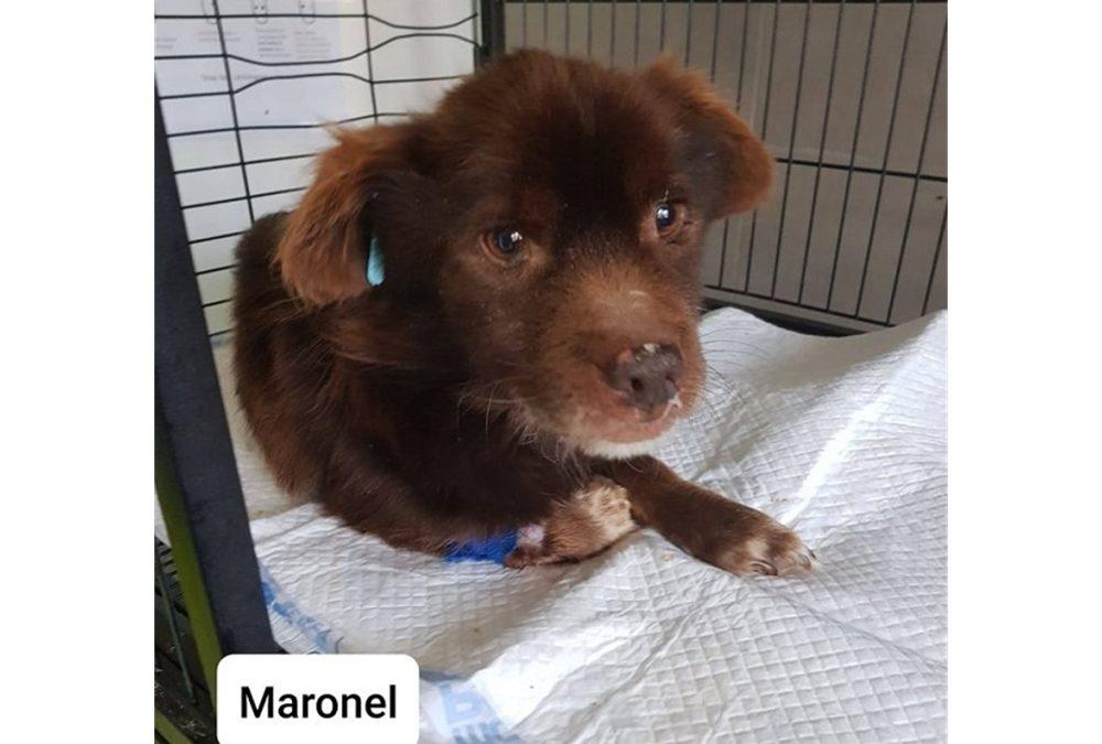 Maronel