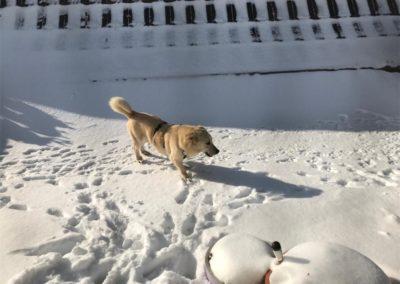 Dylan Bild 4 im Schnee