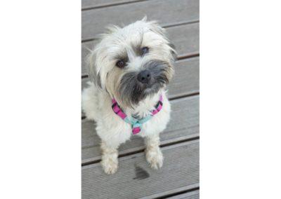 Lulu Profilbild