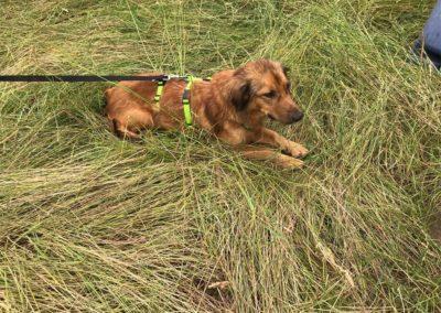 Caya im hohen Gras